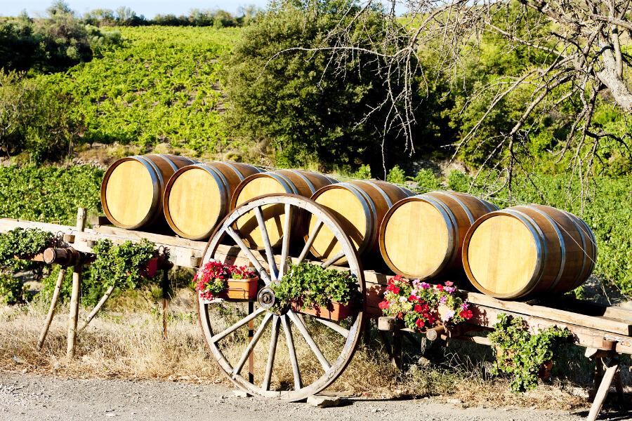 Vineyard, Languedoc